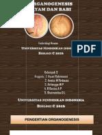 Kelompok 3 Ppt Organogenesis Biologic2016