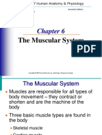 muscle-system.ppt