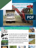 Tecnologia del cultivo de Caña de Azucar