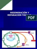 Regeneracion y Reparacion Tisular -I (1)
