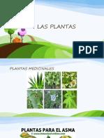 Presentación Las Plantas