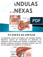 GLANDULAS ANEXAS