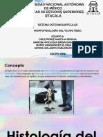 MORFOFISIOLOGÍA DEL TEJIDO ÓSEO.pptx