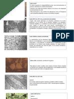 Micrografias