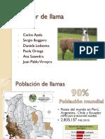 Clúster de Llama BOLIVIA LA PAZ
