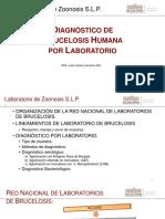 Diagnostic o Bruce Los is Human a Lab Oratorio