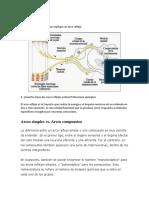 349546464-Fisiologia-laboratorio-2.docx