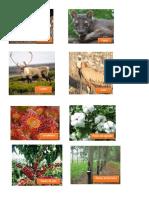 animais e plantas.docx