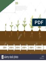 Infografia de Vectores de Fases de Crecimiento Vegetal Arbol Con Hojas Verdes Que Crecen Fuera de La Tierra Ilustracion de La Siembra de Vegetales y Frutas Pw9rfa