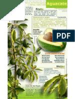 Propiedades Del Aguacate Infografia