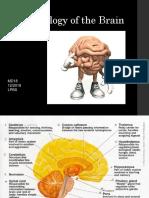 Nervous System Embryology