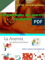 AP Circulatorio Enfermedades