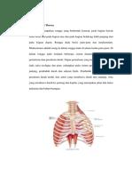 Anatomi Otot Thorax Ulfa