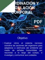 Coordinación y Regulación Corporal