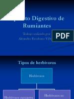 Aparato Digestivo de Rumiantes 1208607636320908 8