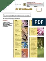Guía Reproduccion Animales 2019