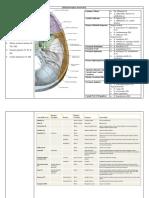 Daffa - Sistem Saraf Manusia Anatomi Lab