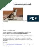 Los gorriones se adaptan genéticamente a la contaminación.docx