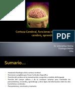 10 Cortezacerebralfuncionesintelectualesdelcerebrodrjohnnathanmolina 140503233751 Phpapp01