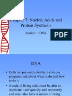 DNA Gmo identification