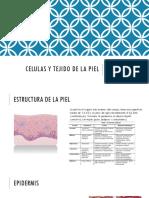 Celulas y Tejido de La Piel