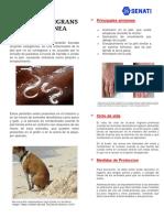 MICRIOBIOLOGIA DE ALIMENTOS.docx