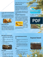 British Virgin Islands Sargassum Information Brochure-2