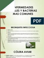 Bronquitis Infecciosa - Copia