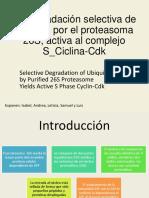 Proteasoma-26S