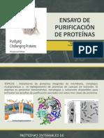 Ensayo de Purificación de Proteínas