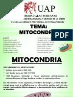 Mitocondrias