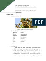identifikasi senyawa golongan glikosida saponin triterpen dan steroid
