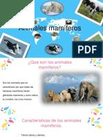 Animales Mamiferos MFOR
