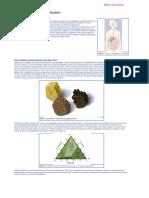 Artifical Hearts Information Sheet