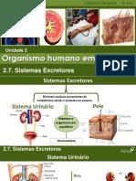 CN9_Sistemas_Excretores