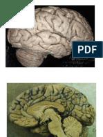 01 - Central anatomy.pdf