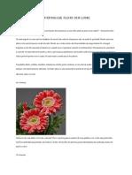 Top 30 Cele Mai Frumoase Flori Din