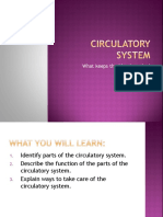 4th Class Circulatory System