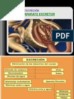 aparato_excretor_3eso.