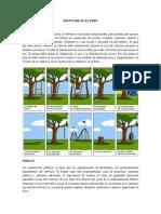 Software en el Perú