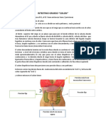 Anatomia Colon