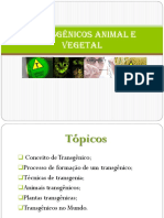 Transgênicos Animal e Vegetal