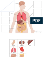 free_Body Organs Matching & Puzzles.pdf