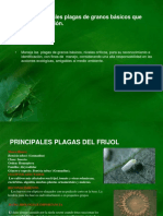 unidad-iii-plagas-de-granos-basicos-20113.pdf