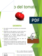 cultivodeltomatesiembra-coseha