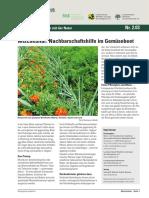 Nutzgarten Mischkultur 03