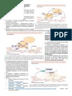 COAGULACIÓN SANGUÍNEA Y ANTICOAGULANTES, FIBRINOLÍTICOS Y ANTIPLAQUETARIOS.docx