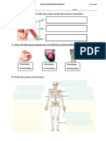 Test Musculoskeletal System
