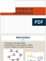 Tema 13 Sistema Endomembranas