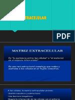 MATRIZ EXTRACELULAR.pptx